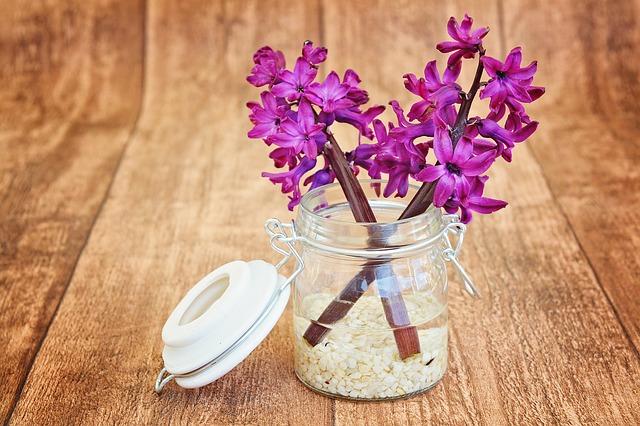 hyacinty ve skle